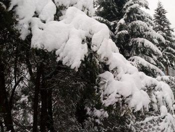 Uroki zimy 13