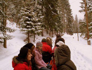 Ferie zimowe – kulig 3